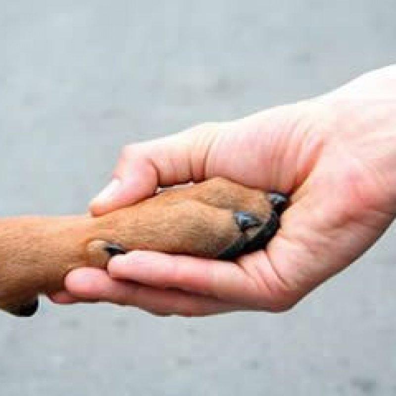 Léo Moraes elabora Projeto de Lei para penalizar agressores de animais domésticos