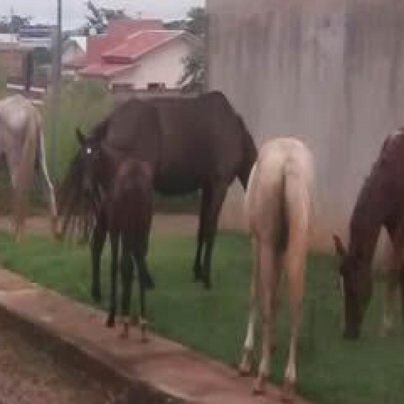 Ouro Preto: moradores flagram animais soltos pelas ruas do bairro Colina Park