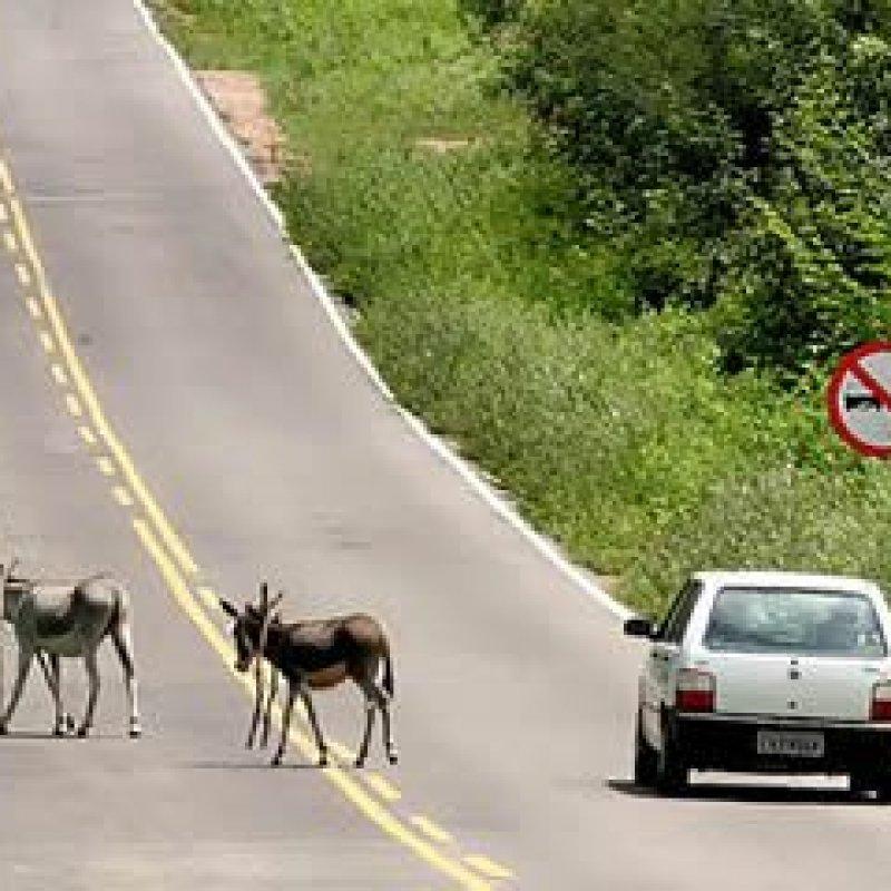 DNIT é responsabilizada por colisão de veículo com animal solto em rodovia