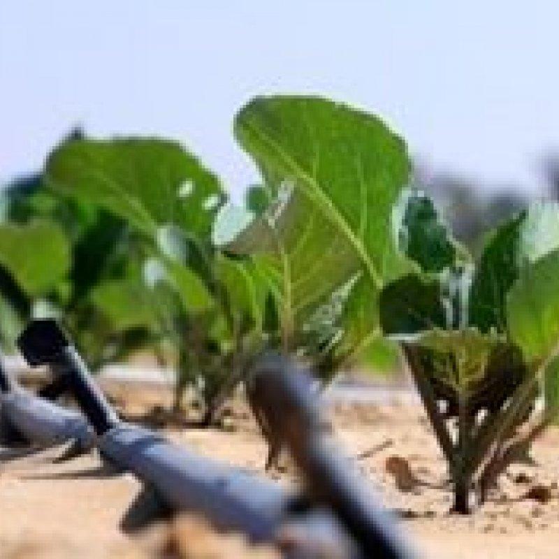 A inovadora técnica capaz de transformar areia do deserto em terra fértil