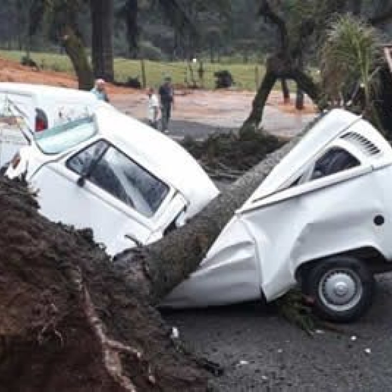 Kombi funciona mesmo depois de atingida por árvore; veja vídeo