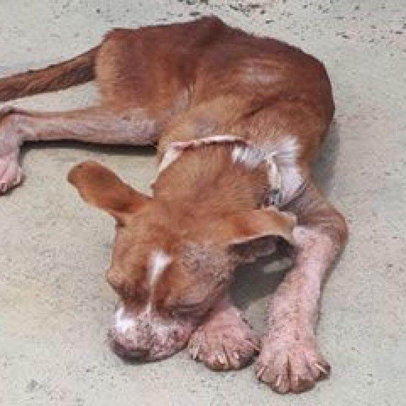 Ouro Preto: cachorro é acolhido por ONG após sofrer maus-tratos; caso é denunciado na polícia