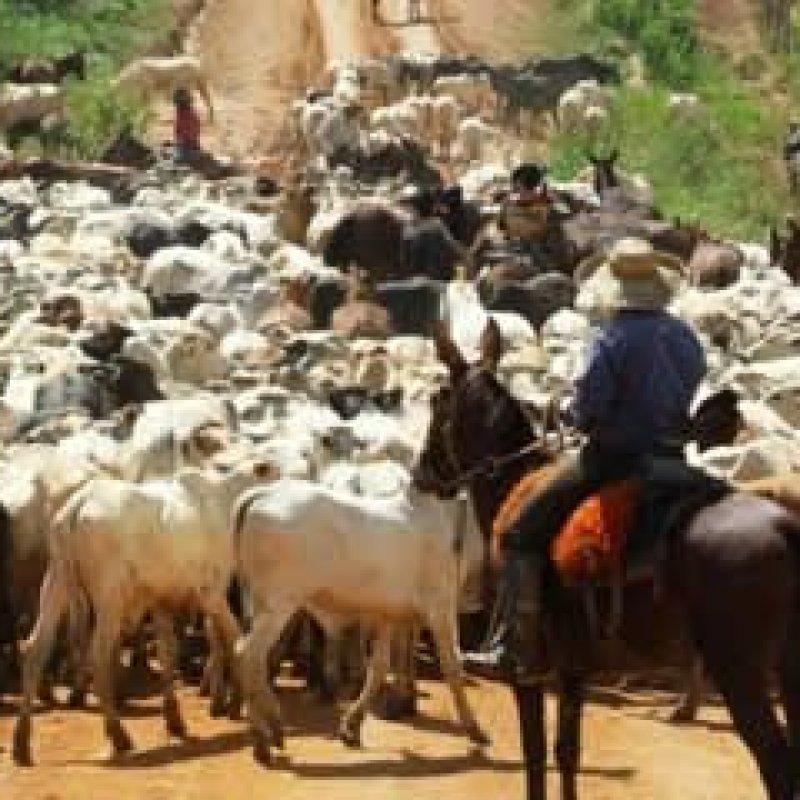 Guia de Transporte Animal será eletrônica em Rondônia, diz Idaron
