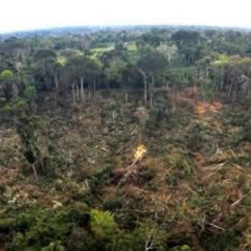 Polícia detém cinco homens desmatando área de preservação permanente