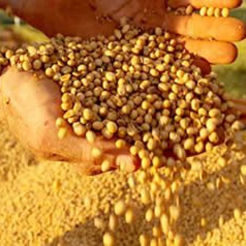 Produção de soja em RO tem expectativa de crescimento maior que a média nacional