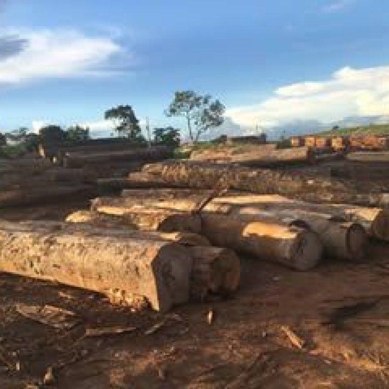 Ibama aplica R$ 8 mi em multas por manejos fraudulentos em Rondônia
