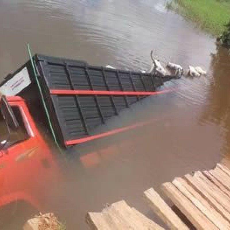 Jaru: caminhão carregado de gado cai em ponte e 15 animais morrem afogados