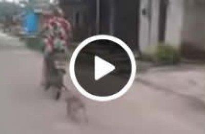 Mulher é filmada arrastando filhote de cachorro