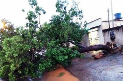 Ouro Preto: temporal e chuva forte assusta, provoca quedas de arvores, poste, destelhamento e alagamento