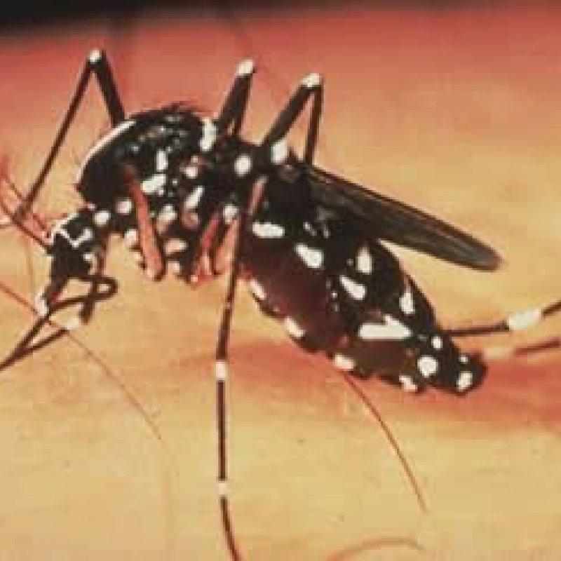 Dengue, Chikungunya e Zika virus: é preciso prevenir