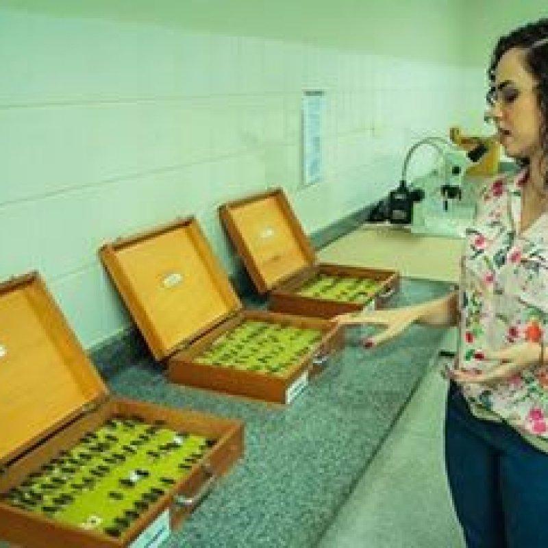 Três besouros foram confirmados infectados com doença de Chagas em Rondônia, em 2018