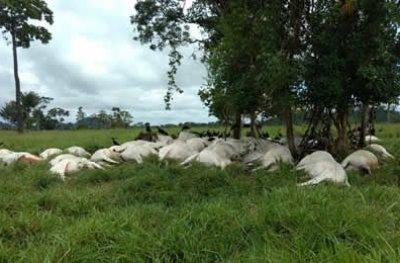 Raio mata 103 bois e deixa prejuízo de R$ 130 mil a fazendeiro de RO