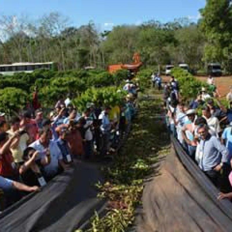 Para cafeicultores de Rondônia, colheita semimecanizada é solução para safras futuras