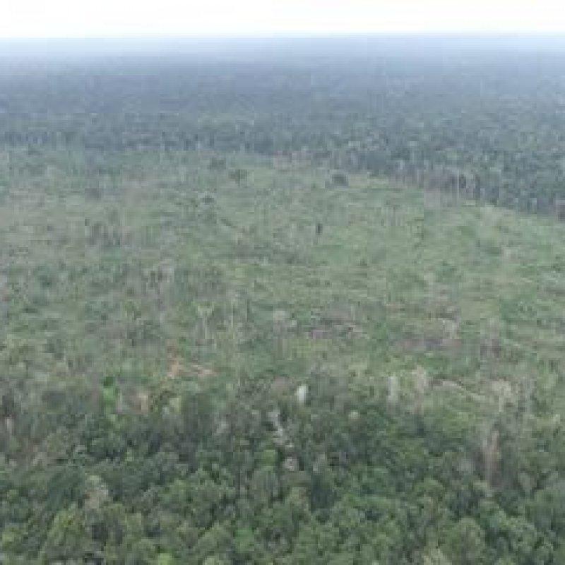 Ibama multa homem em R$ 90 mil por desmatar área de reserva ambiental em Buritis