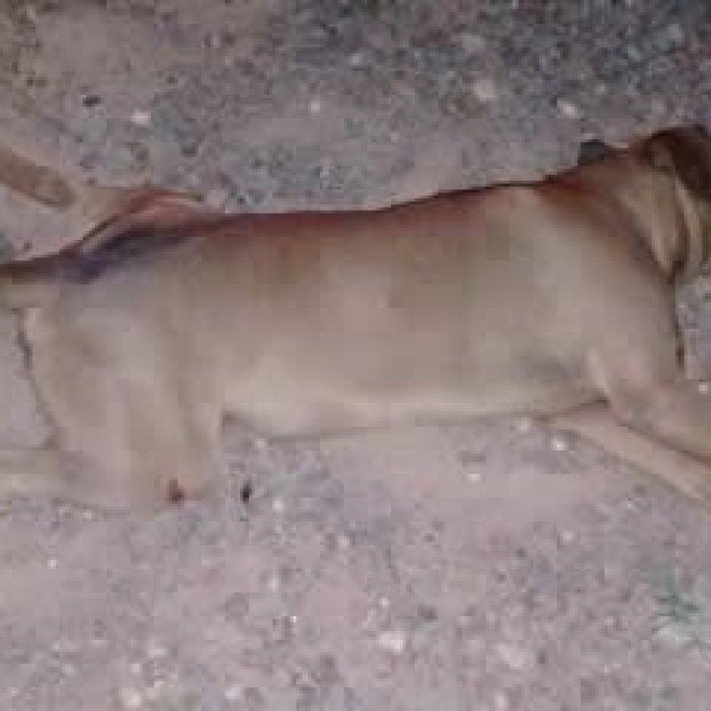 Mirante da Serra: motociclista fica ferido ao colidir com cachorro na RO-470 (linha 81)