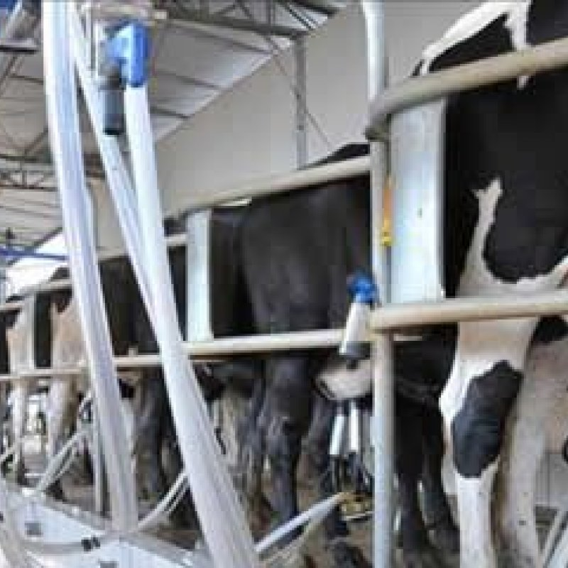 Rondônia ocupa o 9º lugar na produção de leite no País