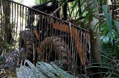 Operação conjunta é deflagrada em área indígena para coibir extração de madeira em Rondônia