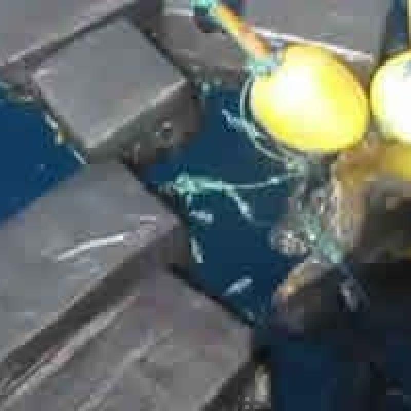 Tartaruga encontrada presa em pacotes de cocaína no valor de 53 milhões