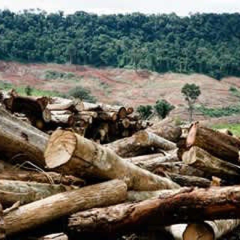 Fazendeiro de Alta Floresta é condenado a reflorestar área desmatada irregularmente