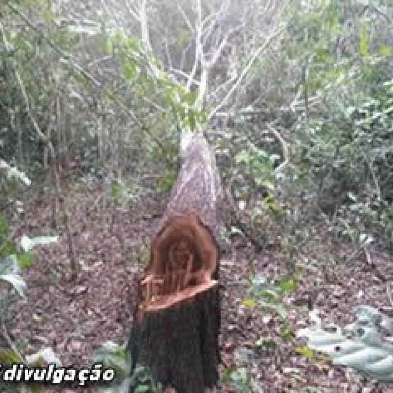 Mirante da Serra: PM prende dois homens por furto e exploração ilegal de madeira