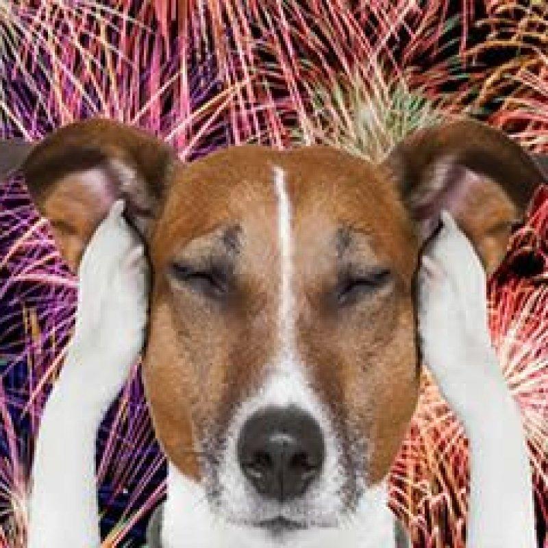 SP proíbe fogos de artifício barulhentos para preservar animais e idosos
