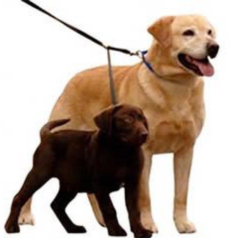Homem é obrigado pela Justiça a pagar pensão de R$ 1.050 para animais de estimação