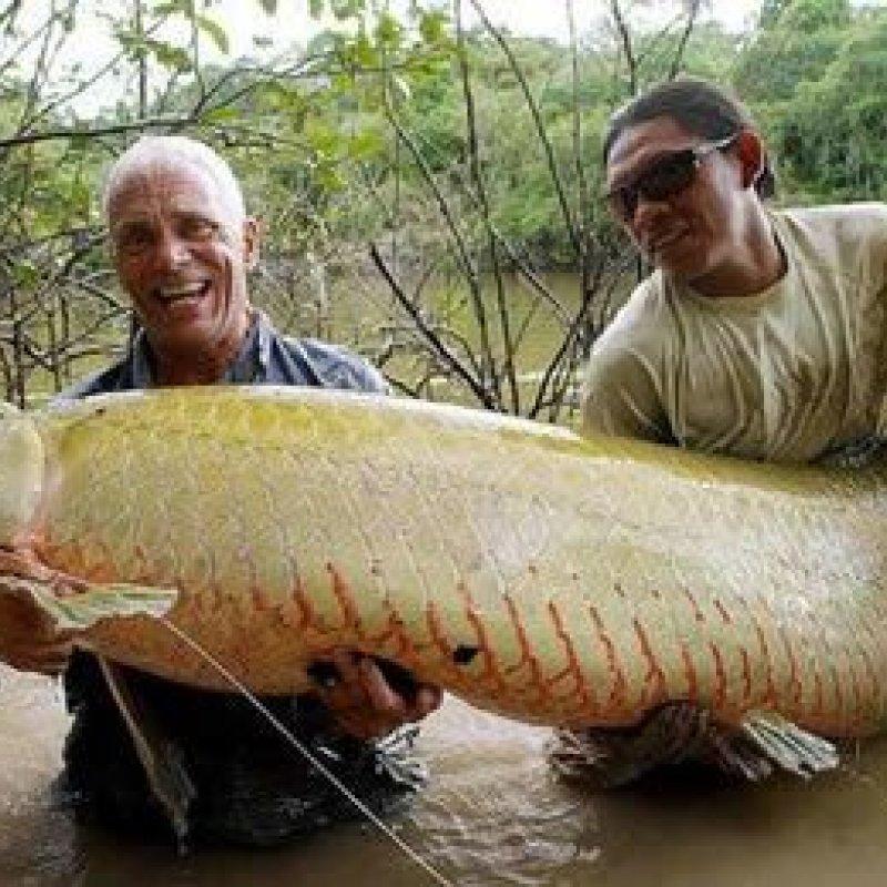 Feira do peixe da Amazônia começa nesta quinta-feira, 26, em Ji-Paraná