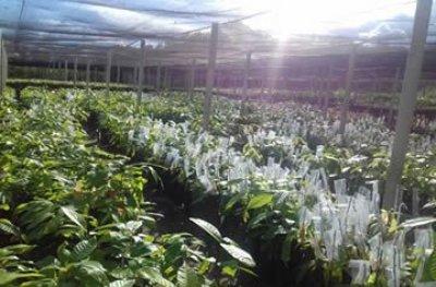 Ouro Preto: Prefeitura desenvolve projetos que incentivam a agricultura familiar