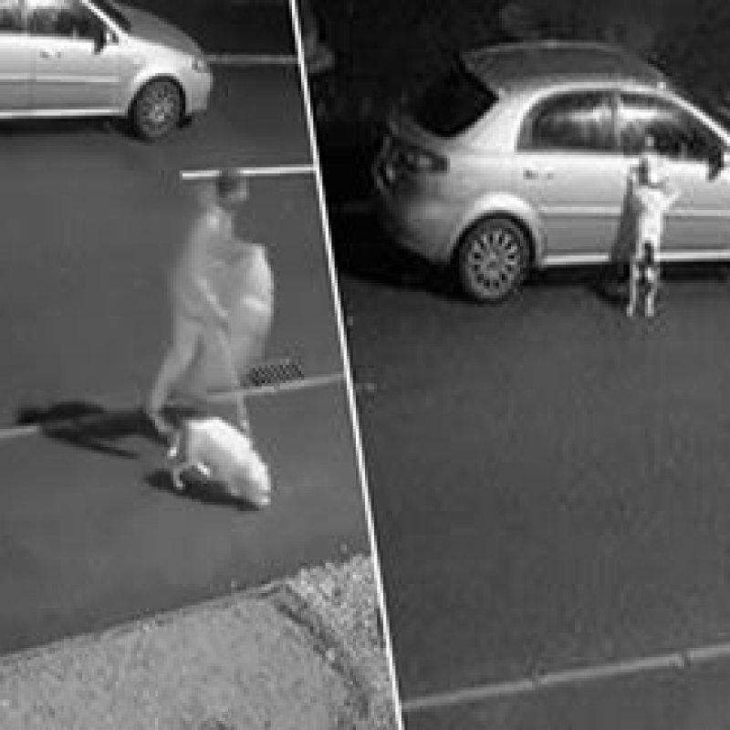 Cachorro se desespera ao perceber que dono vai abandoná-lo na rua; veja o vídeo