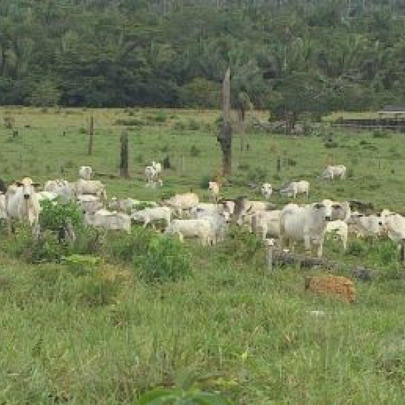 Comercialização de carne bovina ilegal deve ser combatida em Rond