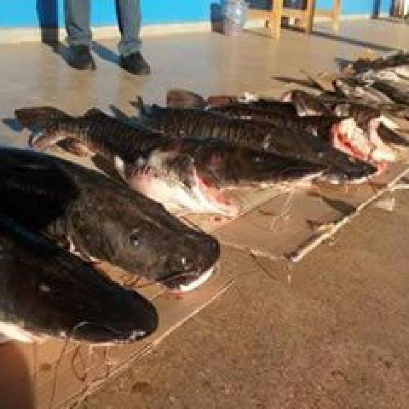Polícia apreende 120 kg de peixe com paranaenses em Cabixi