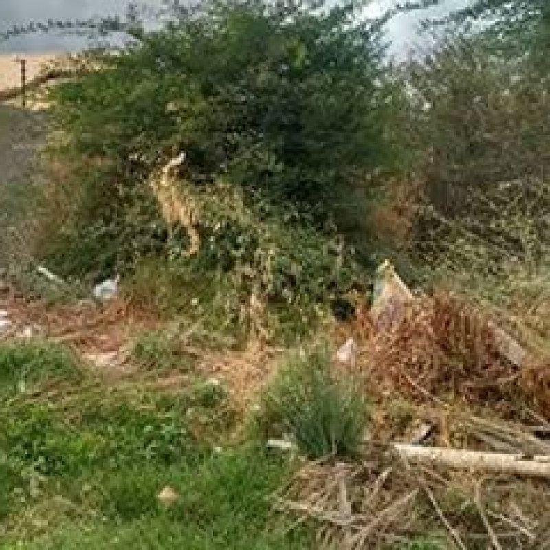 Ouro Preto: Prefeitura passa a notificar proprietários de terrenos baldios