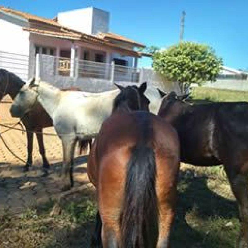 Centro de Zoonoses, com apoio da Idaron, apreende cavalos soltos em vias públicas