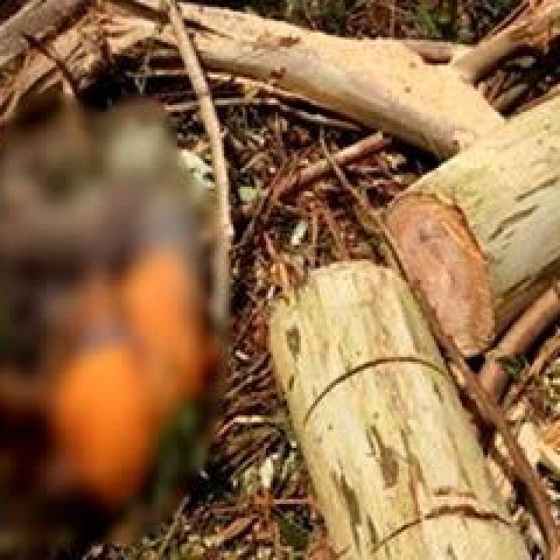 Homem morre durante derrubada de árvores em fazenda