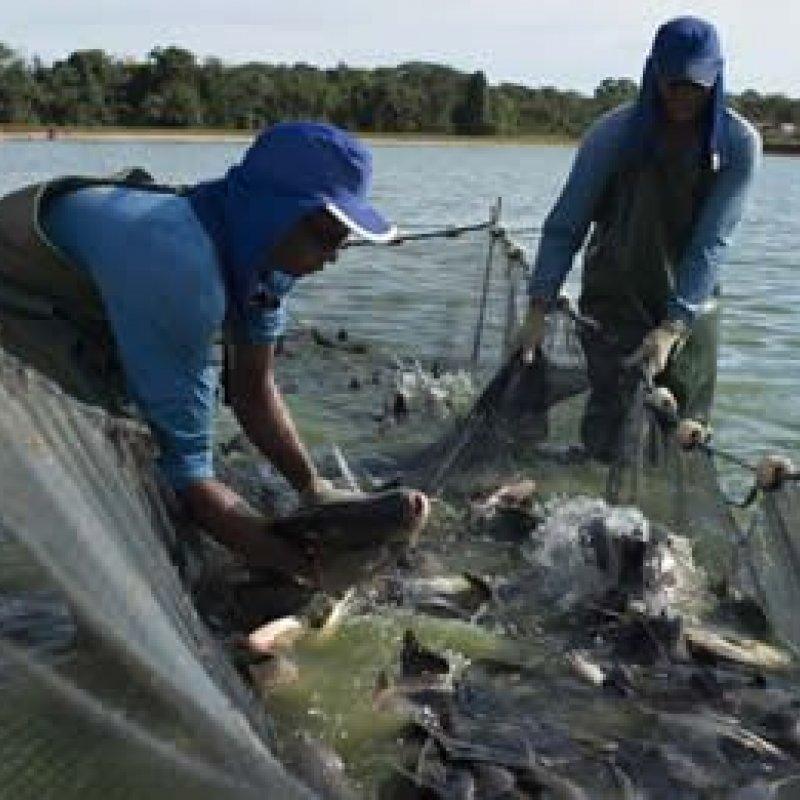 Rondônia pode aumentar em até 10 vezes produção de peixe, diz secretário nacional de Pesca